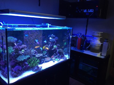 Aquarium supplies